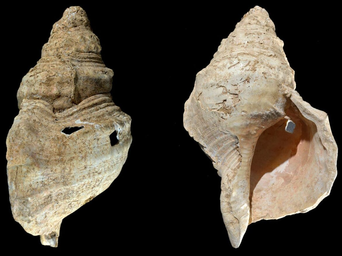 Shell collected in French cave found to be 18,000-year-old wind instrument
