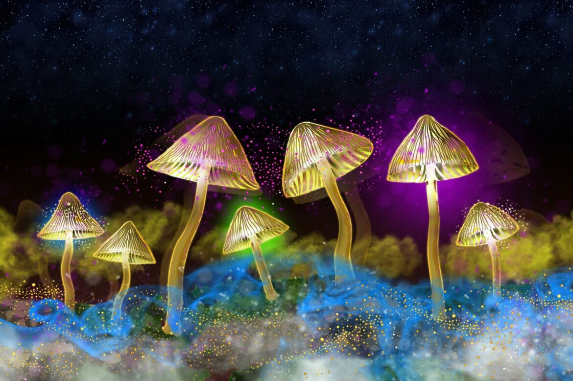 """Profiting From The """"Shroom Boom"""""""